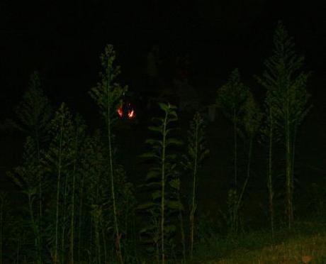 firelight-final.jpg