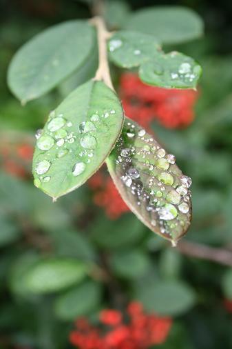 raindrops-2.jpg