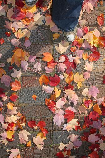 fall-one-final.jpg