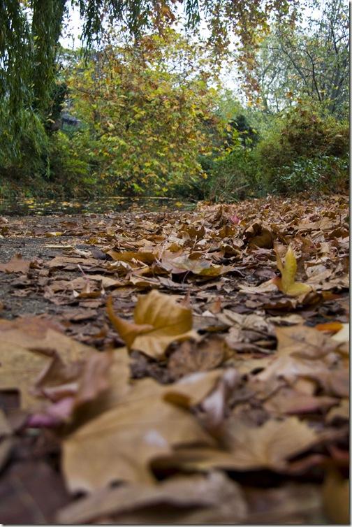 depth of field leaves final
