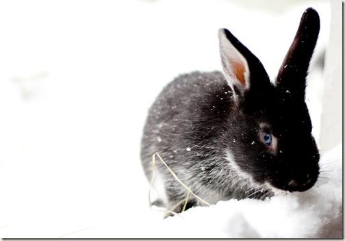 bunny final 2-1