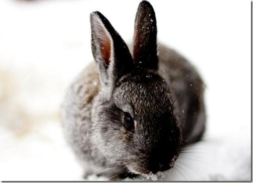 bunny final 3-1