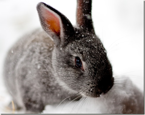 bunny final 4-1