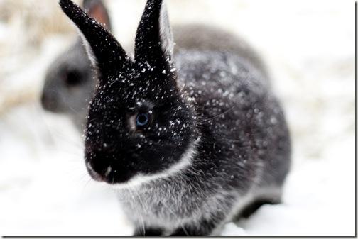 bunny final 5-1