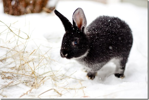 bunny final 7-1
