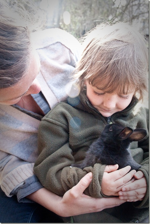 bunny love final-1