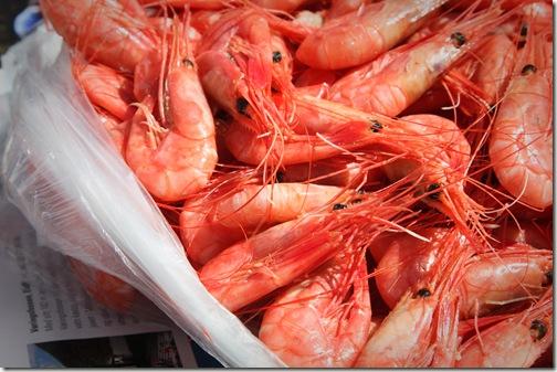 shrimp boat  final 3-1
