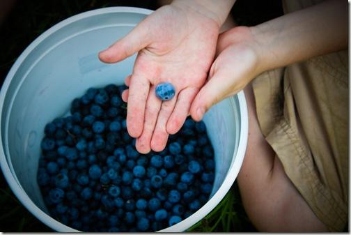 blueberry final 20-1