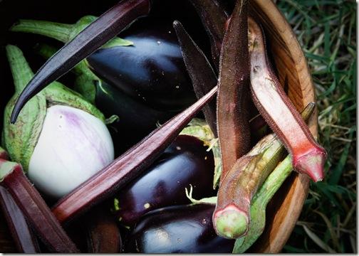 eggplant and okra final-1