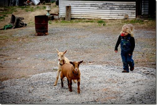 eljin goat herder_