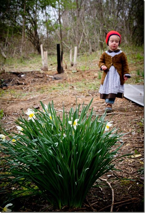sparrow daffodils