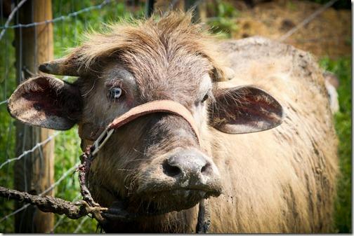 terra buffalo 4 (1 of 1)