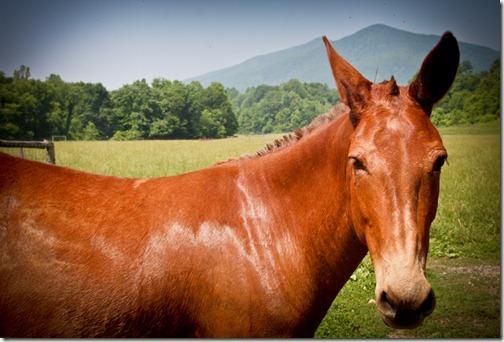 terra horse (1 of 1)