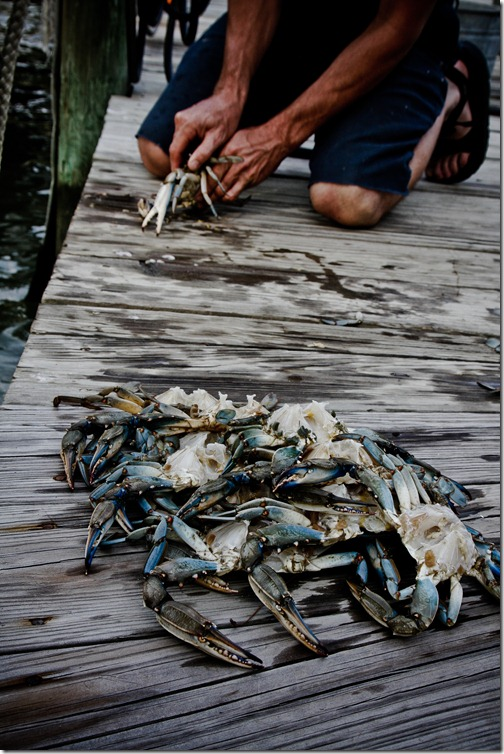 beach crabs 25