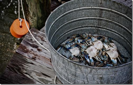 beach crabs 30