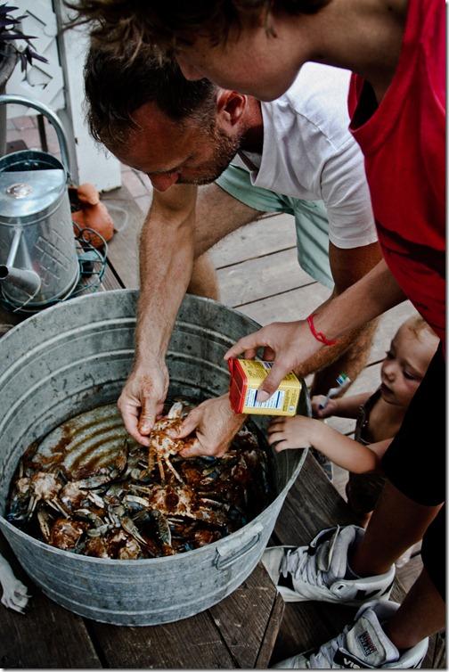 beach crabs 33