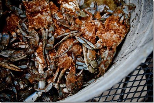 beach crabs 34