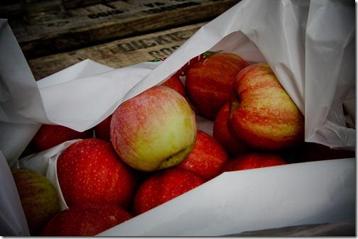 apples mcintosh 16