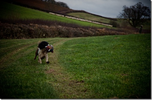 pheasant hunt 32 jan2012