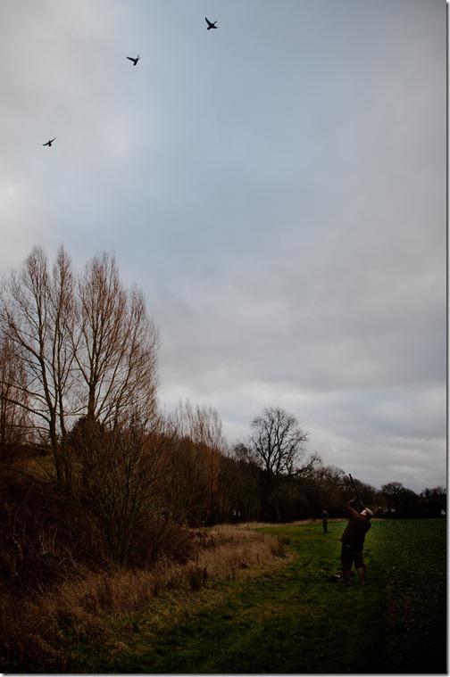 pheasant hunt 45 jan2012
