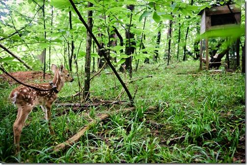 deer matters
