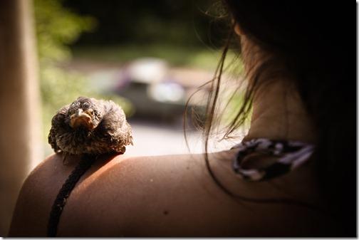 shoulder perch
