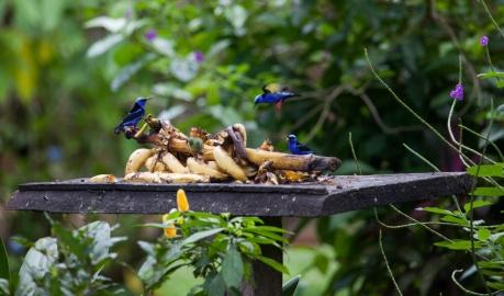 Birds of Colour