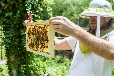 june 2014-bees-02 (1 of 1)