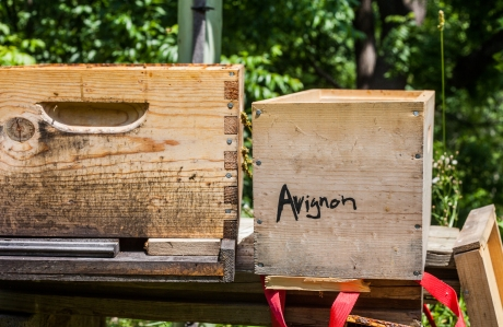 june 2014-bees-05 (1 of 1)
