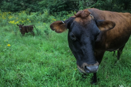 september2014-pasture-09 (1 of 1)