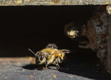 october2014-bee-01 (1 of 1)