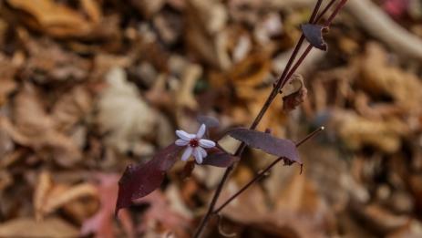 november2014-hike-09 (1 of 1)