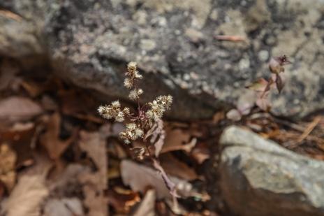 november2014-hike-13 (1 of 1)