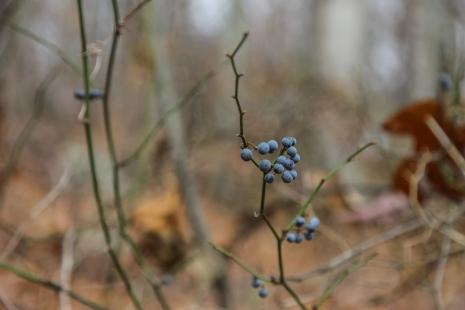 november2014-hike-29 (1 of 1)