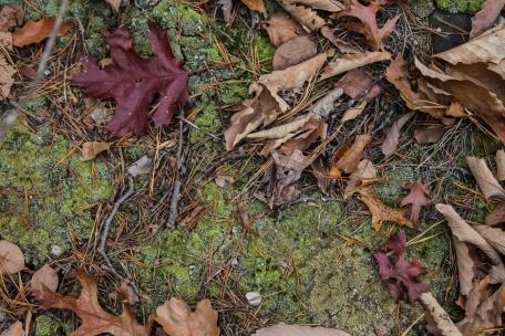 november2014-hike-30 (1 of 1)