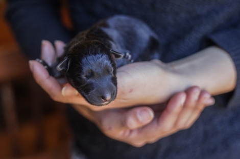 january2015-puppies-04 (1 of 1)