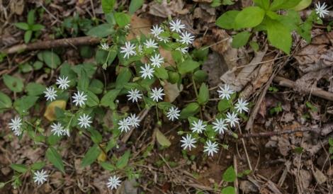 may2015-hike-04 (1 of 1)
